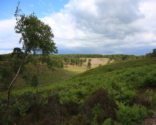 Restoration at Rugeley quarry. Picture: Neil Lambert/RSPB