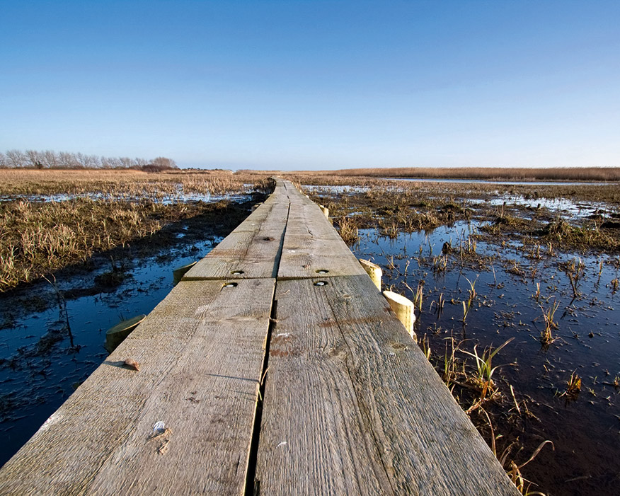 Coastal wetlands are central to reducing flood risk. Photograph: Chris Pole/123RF