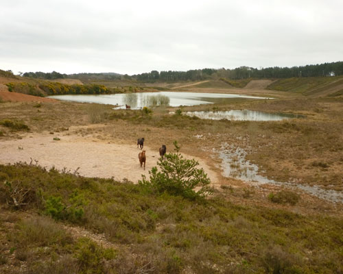 Restoration at Aggregate Industries's Blackhill site in Devon aims to turn the quarry into heathland. Credit: Aggregate Industries