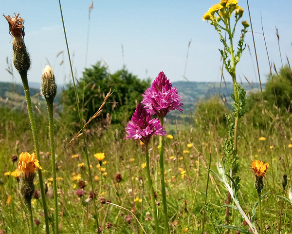 Former quarry at Brown's Folly near Bristol is now a nature reserve with nine species of orchid. Photograph: J Middleton