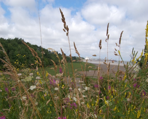 The former rubbish dump has become a wildlife haven. Picture: Mike Jones