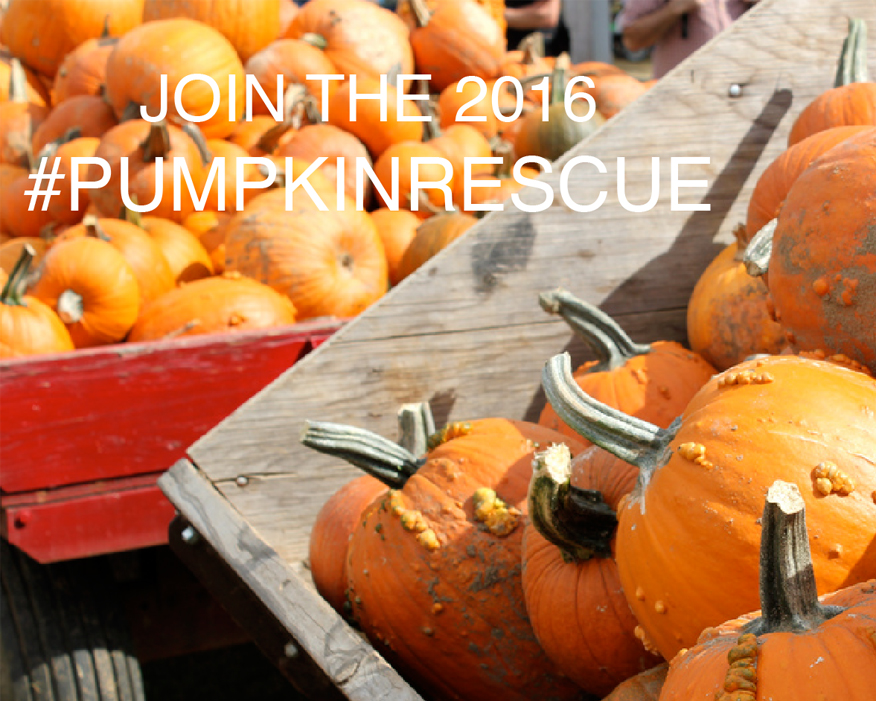 Pumpkins are not just for decoration. Photograph: Hubbub/Lawrence Carlos
