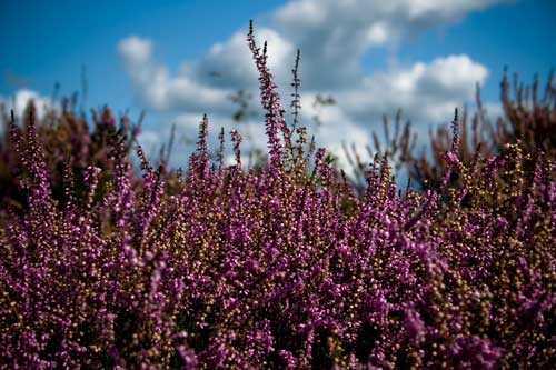 South East of England regional strategy to be abolished with heaths exception