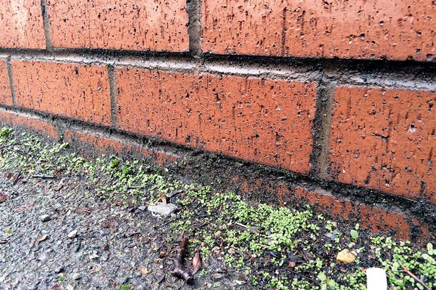 Weeds: councils looking for cost-effective treatments - image: HW