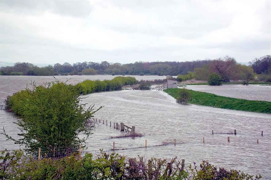 Flooding: planting more trees in river catchments endorsed as National Flood Resilience Review gets underway - image: Keith Laverack