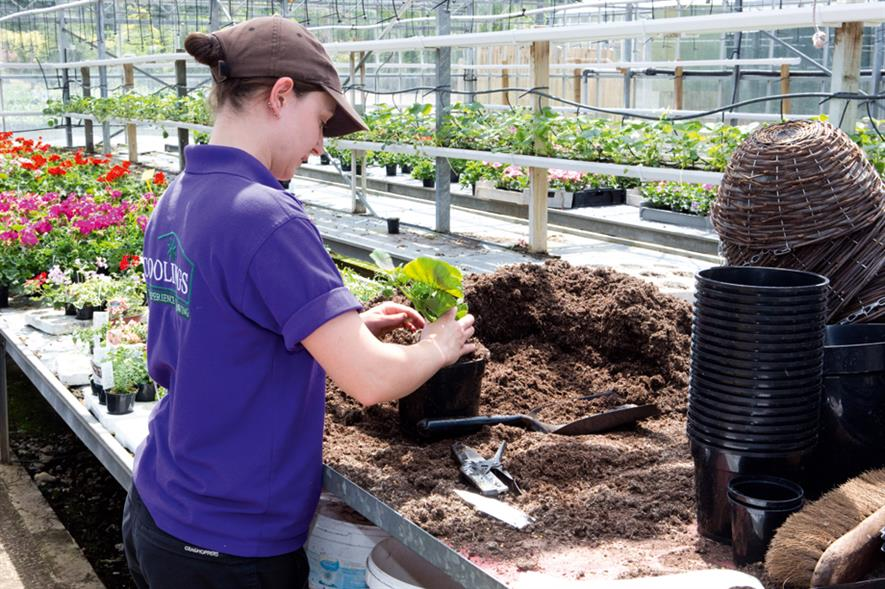 Nurseries: taster days to be run to inspire potential career entrants - image: HW