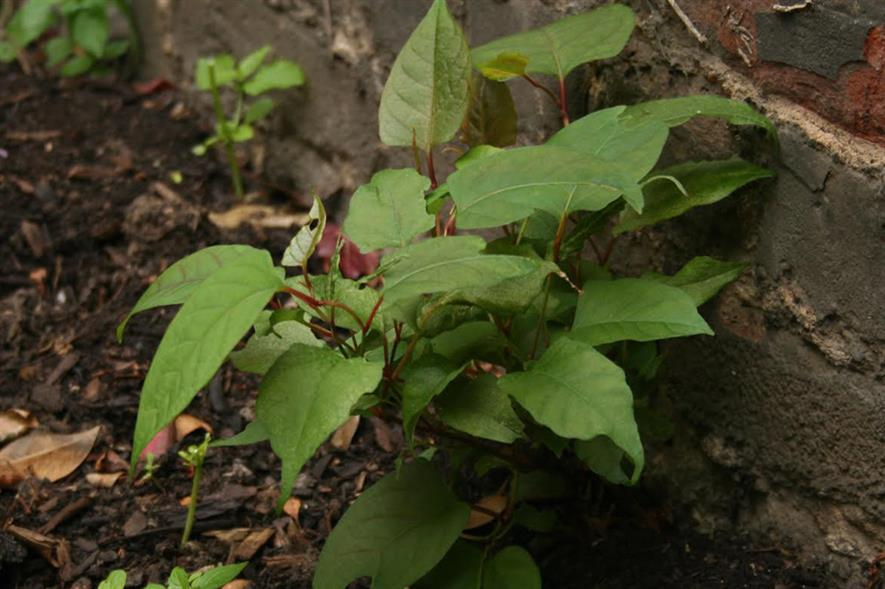 Invasives: fine for homeowners