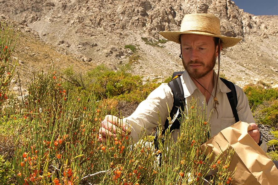 Kew's Michael Way collects Ephedra andina - image: RGB Kew