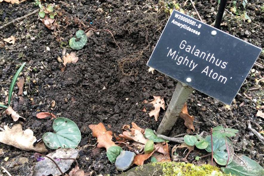 Wisley: plant thefts now up to more than one a month - image: RHS
