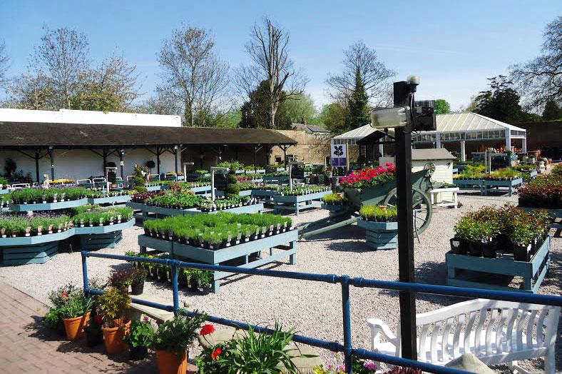Morden Hall: National Trust stockist of Lanhydrock-grown plants