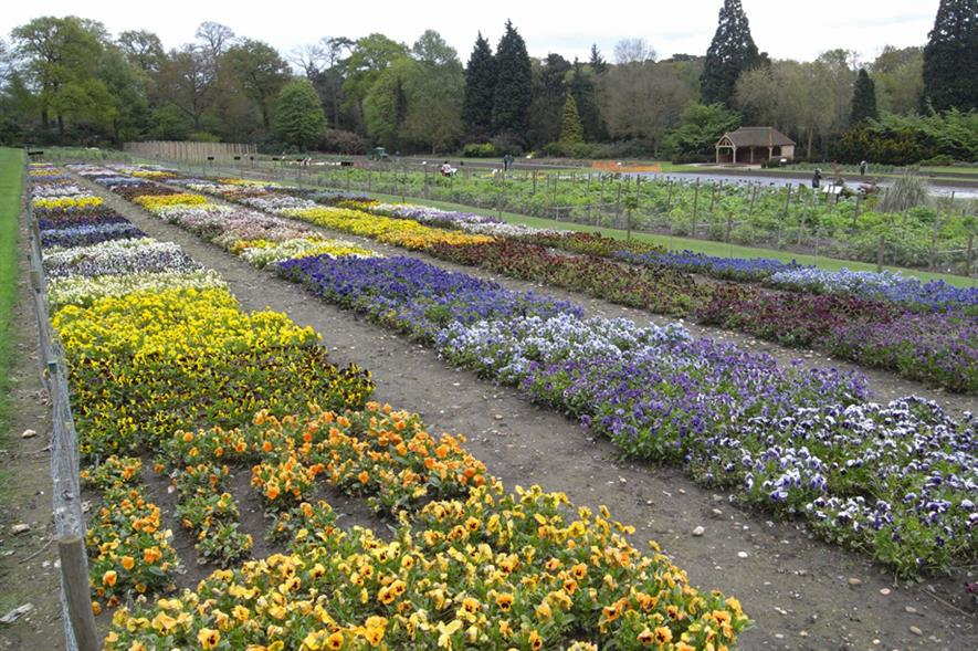 RHS Wisley: trial grounds area