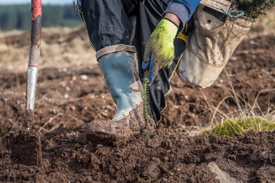 Seeding in Dunning Glen - credit: Scottish Forestry