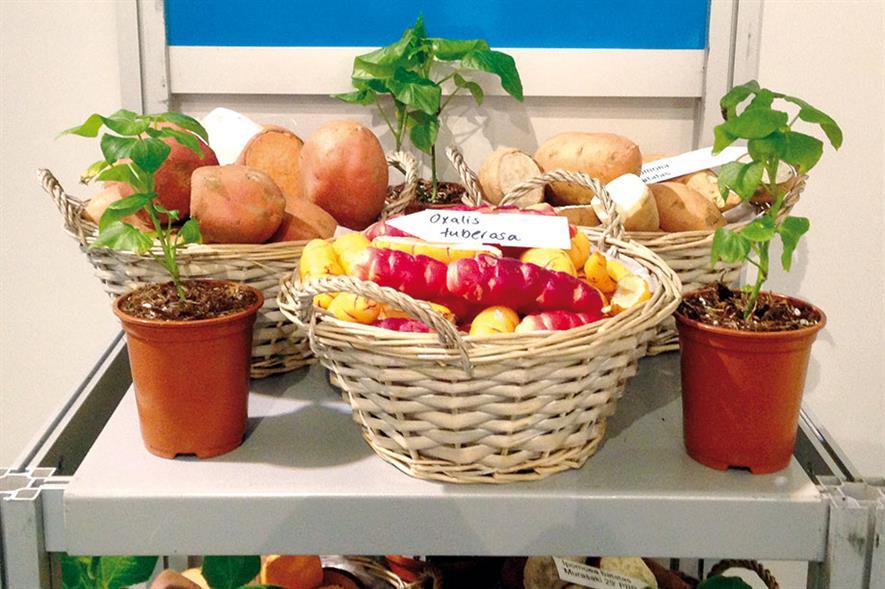 FitzGerald Nurseries: display at IPM Essen trade show - image: HW