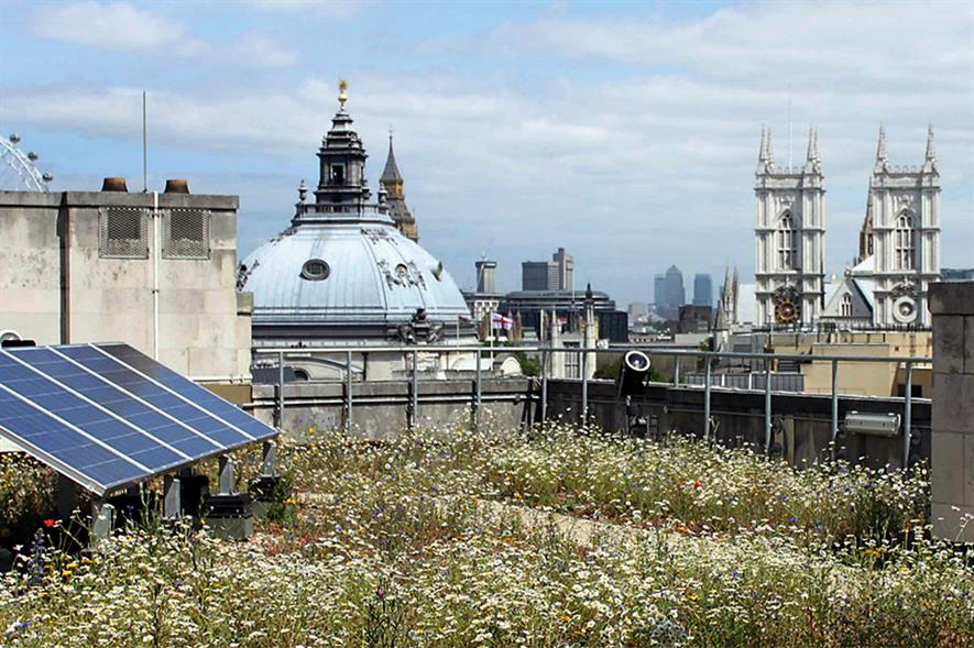 Green roofs: multiple benefits - image: Gary Grant