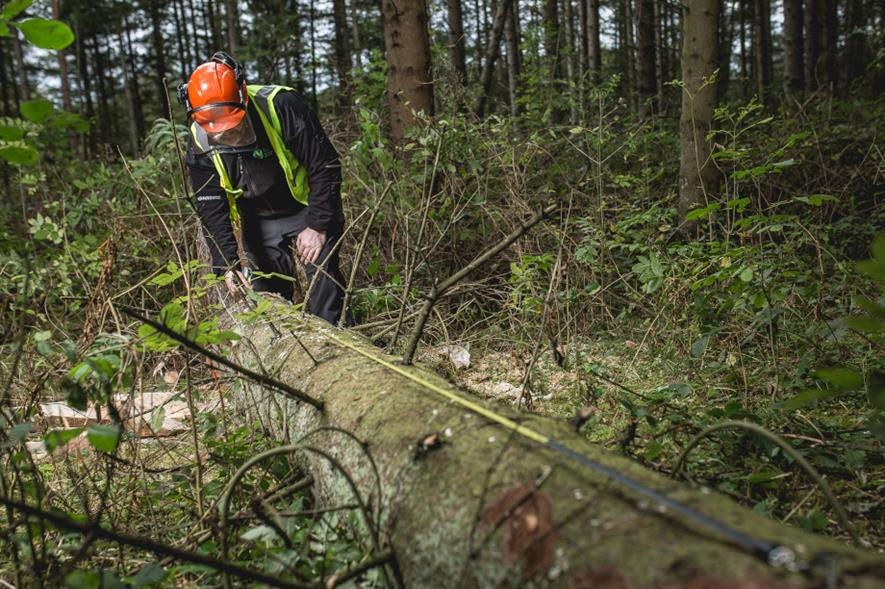 Developers could be fined up to £5,000 for each tree felled illegally - credit: Scottish Forestry