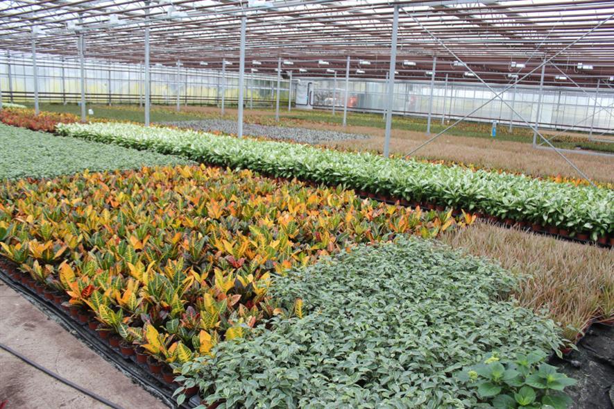 Opperman Plants nursery in Spalding - image: Opperman Plants