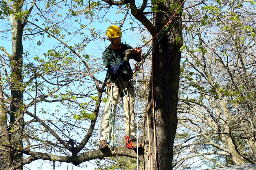 Arborists: specialist recruiter says there are not enough people qualifying at the higher levels to satisfy demand - image: Peter Linehan