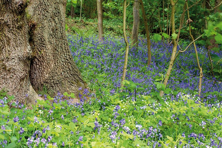 Bluebell Wood: housing development plans progress despite opposition petition signed thousands of local people - image: Matthew Hillier