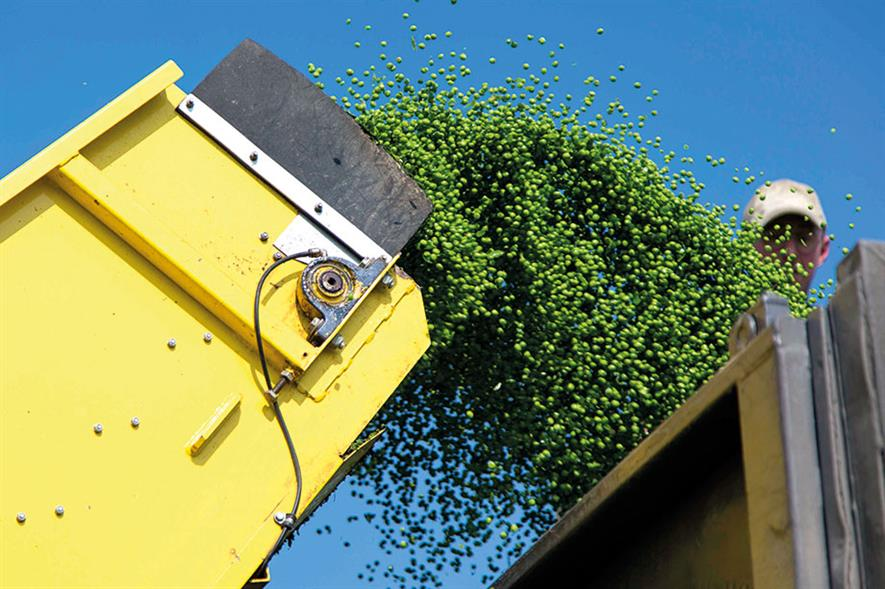 Peas: more than 149,000 tonnes harvested this year - image: News Oresund