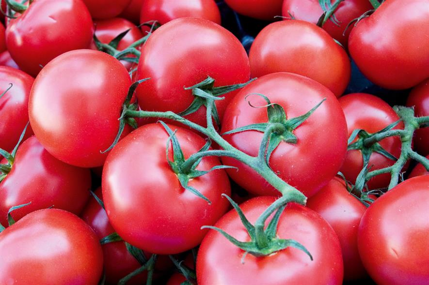 Tomatoes: sustainably grown