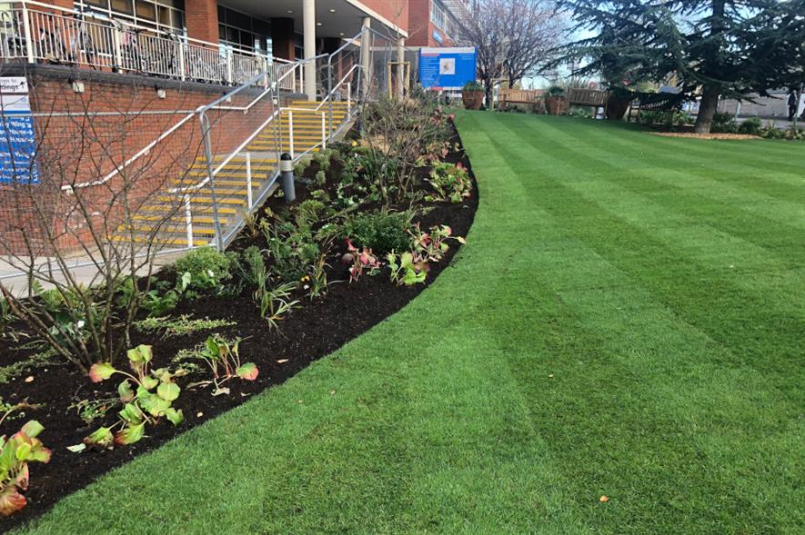 Bowles & Wyer completed the St George's Hospital well-being garden in three weeks - credit: Bowles & Wyer