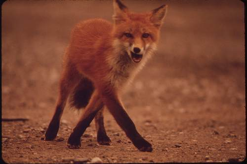 Professional gardener Joe Hashman believes he was unfairly dismissed for his anti-fox hunting beliefs - image: FlickR