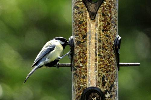 Bird feeders attract diverse species to gardens - image: British Trust for Ornithology