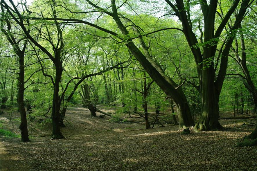 Epping Forest in spring - credit: martin_vmorris/Flickr