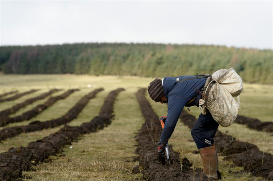 Tree planting at Doddington North, Northumberland - credit: Confor