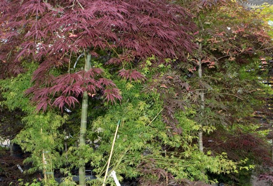 Everyone needs a tree according to Christine Walkden