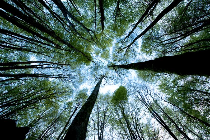 Scottish Forestry has seen a 33% increase in woodland creation applications year-on-year - credit: Scottish Forestry