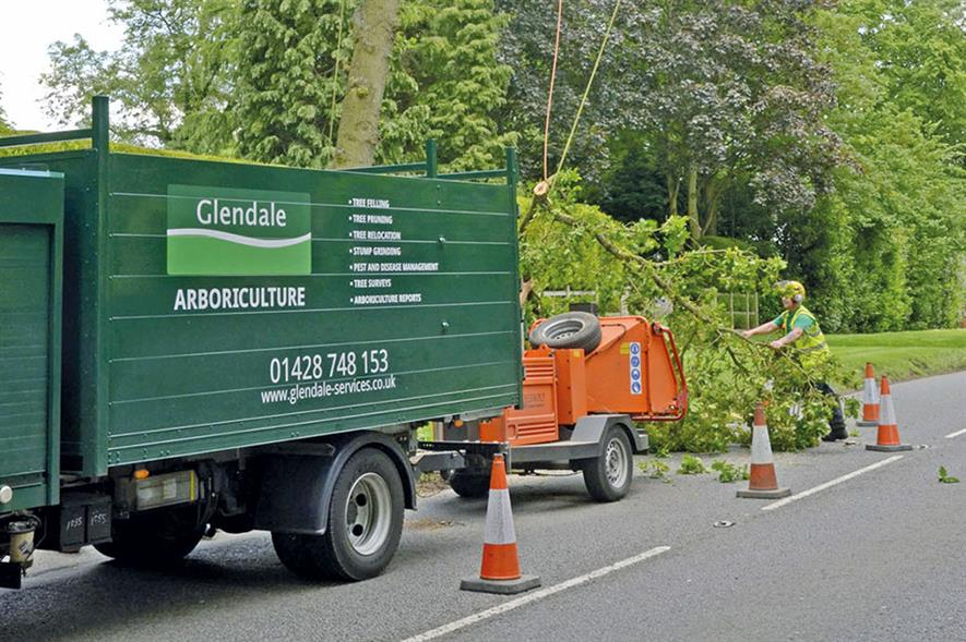 Glendale: business provides a full suite of tree surgery and tree removal services - credit: Glendale