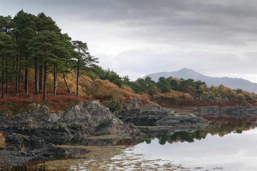 Scots pine wood, Ardnamurchan - image:Arran Moffat