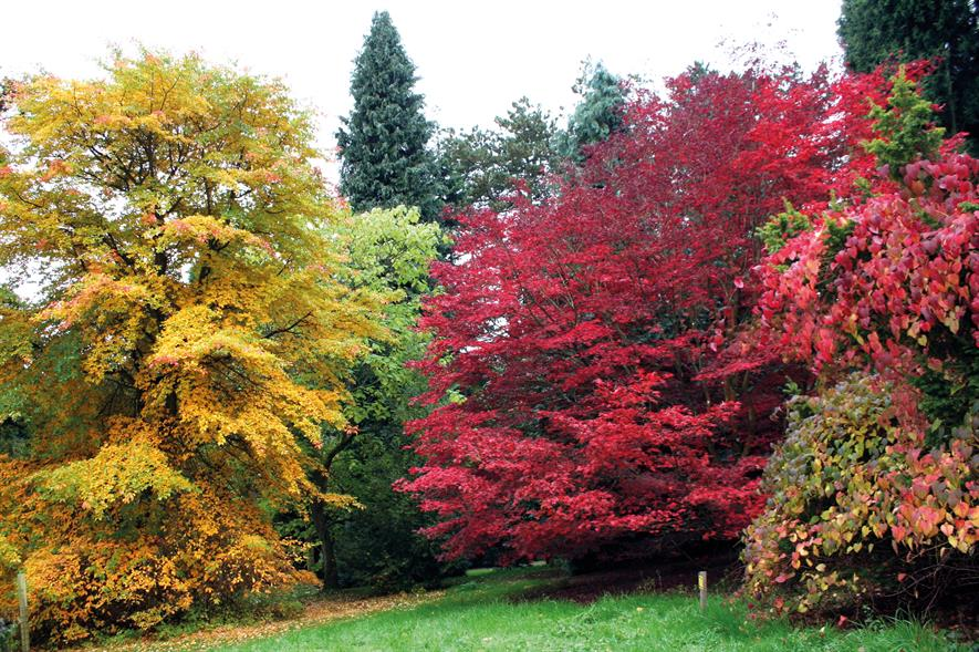 Batsford Arboretum: this year's autumn colour described as the best in 30 years by site's director of operations