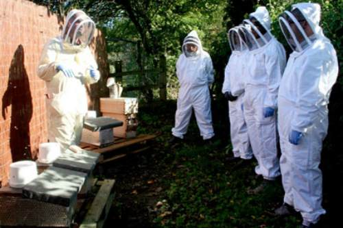 Bee keeper training - image: Groundwork