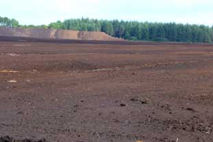 Peat bog. Amateur gardeners account for 69% of peat used in the UK - photo: HW