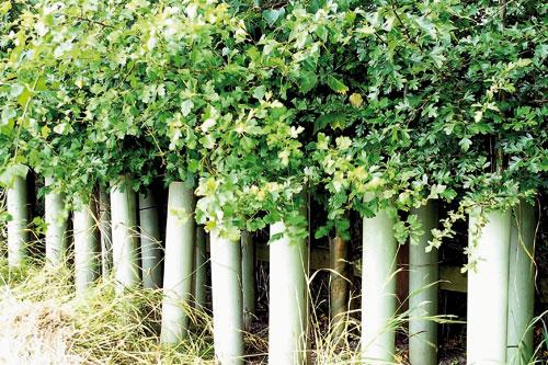 Image: Green-tech