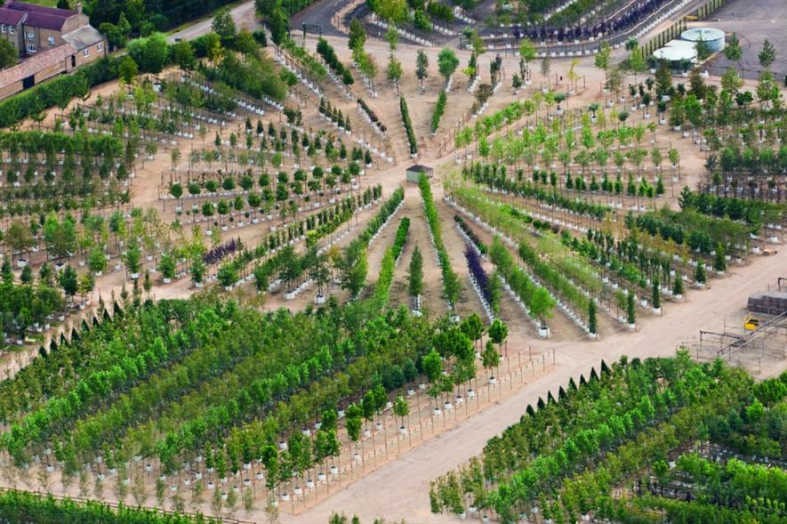 Barcham Trees nursery from the air