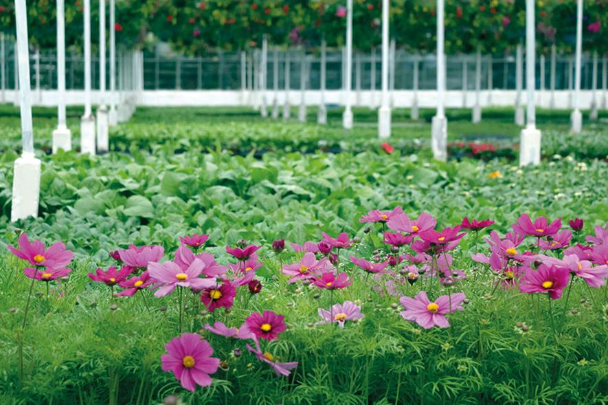 Bathgate Horticulture: offers coir-based professional mixes and reports excellent results with its peat-free bedding compost - image: