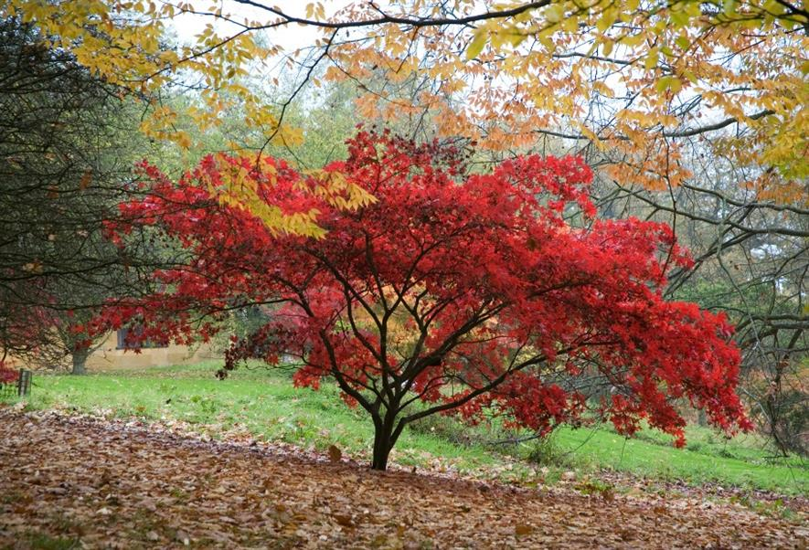 Autumn colour at Batsford