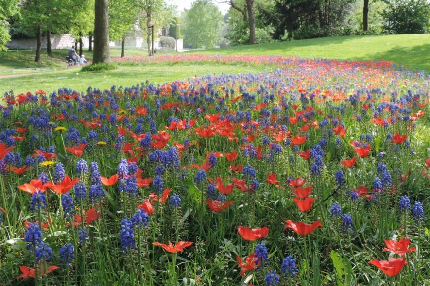 JUB Holland's bee mixture in bloom