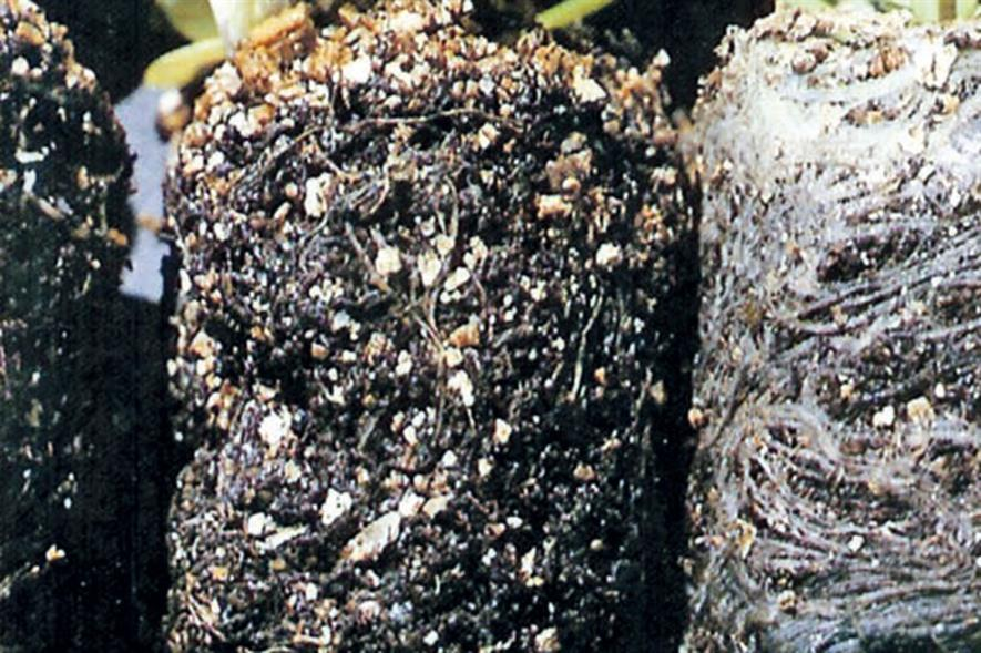 Black root rot caused by a fungus in soil - credit: Dove Associates