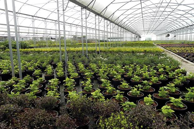 Boningale Nurseries: Supplies trees, shrubs and perennials to the landscape market - image: HW