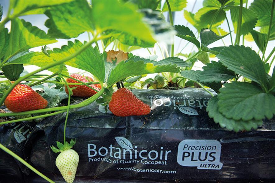 Botanicoir: says coir is mainly used for strawberries and raspberries grown in UK - © Tim Scrivener
