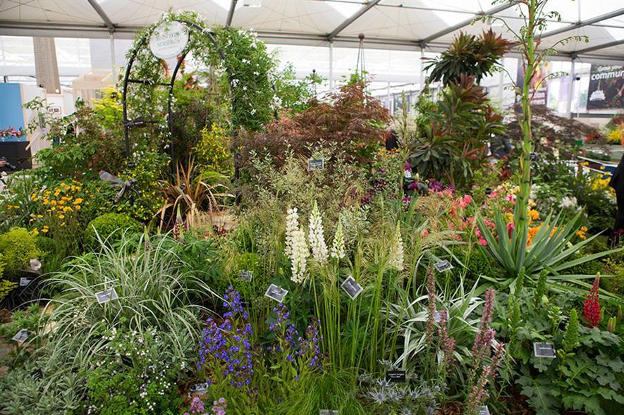 Burcoose Nurseries stand at RHS Chelsea Flower Show 2017 - image: HW