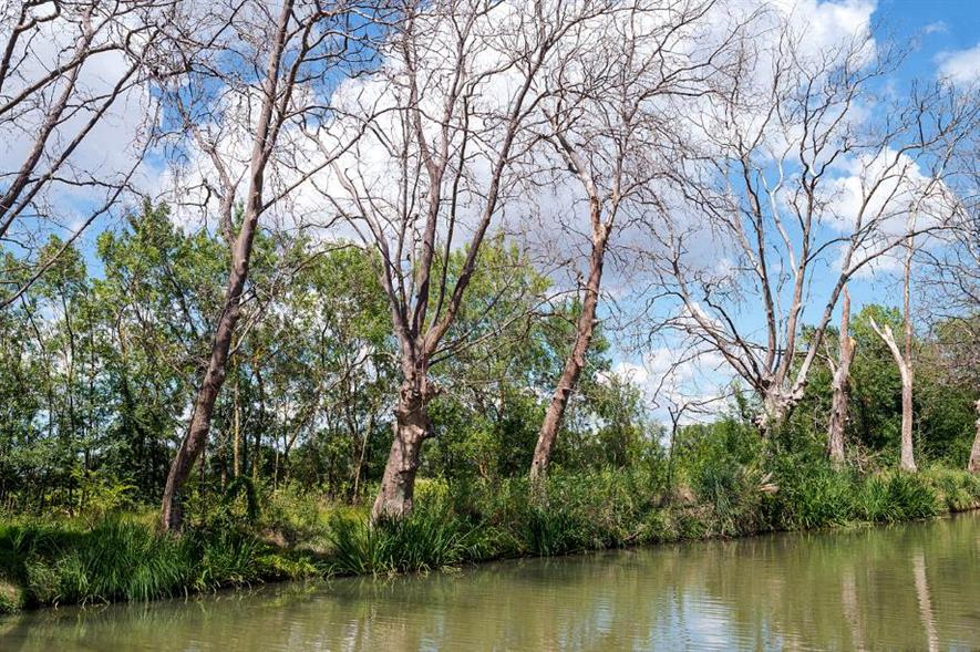 Plane trees lost to CSP along the Canal du Midi, France - image: Christian Ferrer (CC BY-SA 4.0)