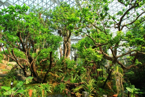 The Warm Temperate House at Qingdao's Plant Pavillion