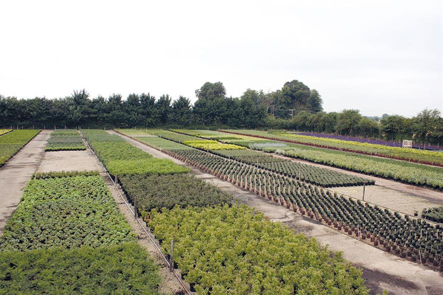 Coles Nurseries: grows trees and shrubs for the amenity and commercial markets - image: James Coles & Sons (Nurseries)