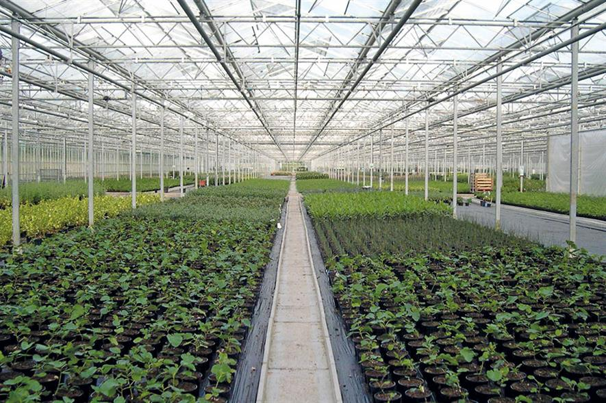 Following best practice at nurseries will lower plant health risks - credit: Dove Associates