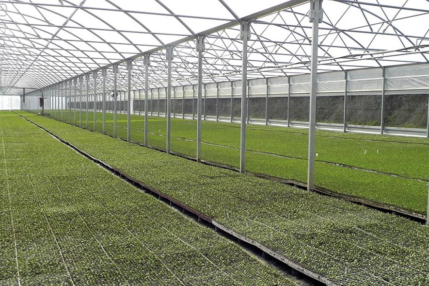 Fentongollan: polytunnel at farm in Cornwall was designed and built by Polybuild - image: HW